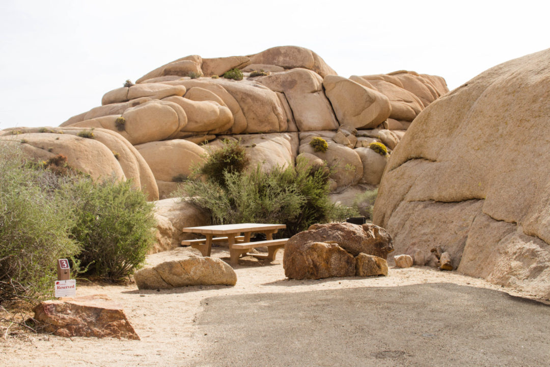 Camping in Joshua Tree National Park | Anna in the Wild